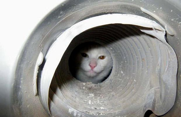 cat in a pipe